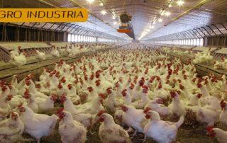 alquiler de grupos electrogenos agroindustria